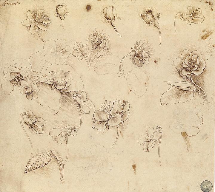 レオナルド・ダ・ヴィンチの画像 p1_29