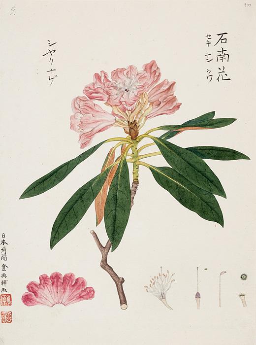 川原慶賀の画像 p1_11