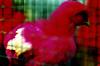 豊かな闇を捉えた蜷川実花の写真展『noir』、渋谷ヒカリエで開催