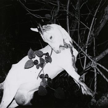 『風姿花伝』より『山形・銀山温泉』、1976年