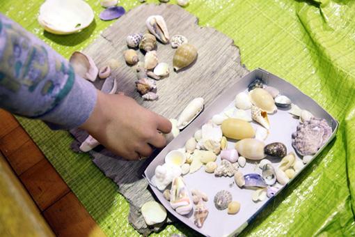 色々なかたちの貝殻 Photo:Yukiko Koshima
