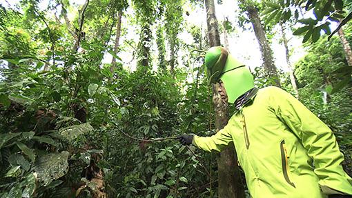 カマキリ先生の首から下の衣装は場所によって異なる。昆虫採取の場所や状況に適した服装を身に着けている