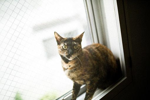 1年前から一緒に暮らす、愛猫のぐーちゃん