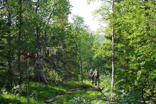 森林や雪山など、いろいろな景色を楽しむことができる