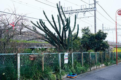 春の兆しを感じる東武伊勢崎線の線路沿い