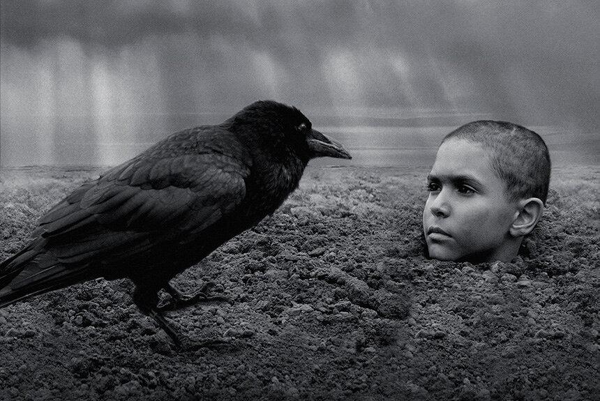 『異端の鳥』に描かれる自由とカオス、不自由と暴力の普遍性