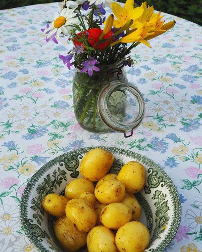 夏至祭のディナーに欠かせない、サマーポテト(新じゃが)。フィンランドでは塩とディル(北欧では定番のハーブの一種)で茹でてバターをつけて食べるのが一般的(写真:筆者提供)