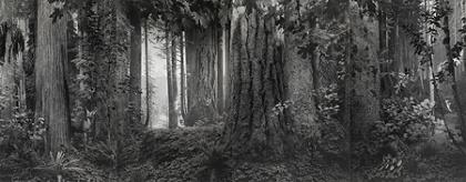 『オリンピック雨林』2012年 ©Hiroshi Sugimoto/ Courtesy of Gallery Koyanagi