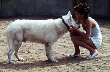 『ホワイト・ドッグ』WHITE DOG: images courtesy of Paramount/Park Circus