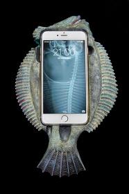 片桐仁『カレイPhone 6 Plus』