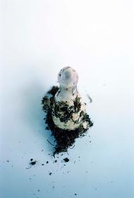 SCABDINAVIAN MUSHROOM #9 ©Takashi Homma Courtesy of TARO NASU