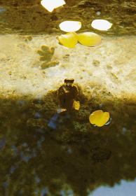 『母』 2008年 ブロンズに金メッキ、水、薔薇 95×40×30mm(ブロンズ像サイズ) photo:workshopSA