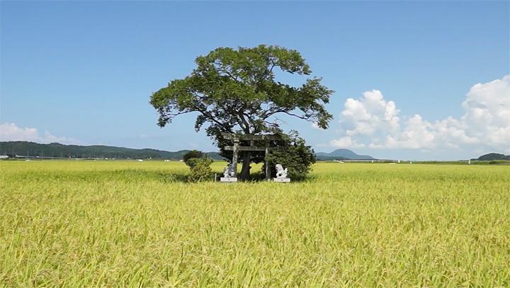 『映像歳時記 鳥居をくぐり抜けて風』イメージビジュアル ©SAIJIKI FILM