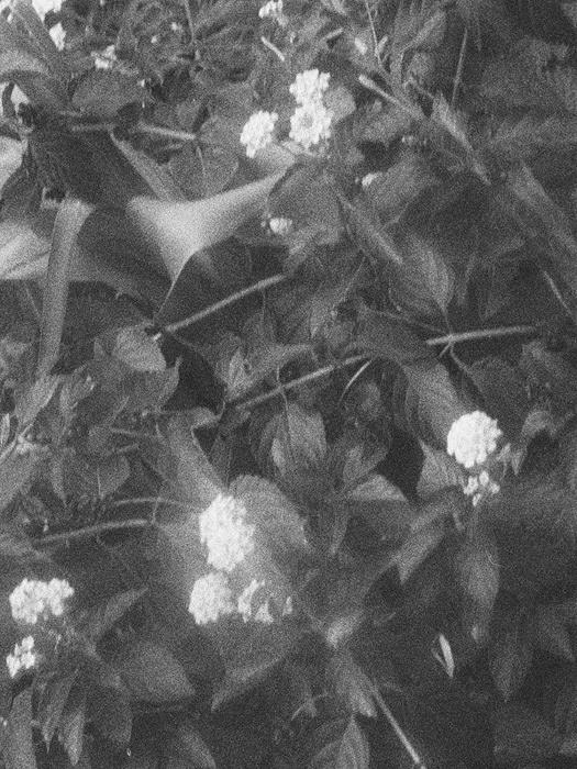 『yo asa 展示受注会』イメージビジュアル 写真:木村和平