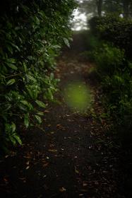 テリ・ワイフェンバック『The May Sun』(2015)©Terri Weifenbach