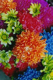 蜷川実花 『flowers』より2015(平成27)年 インクジェットプリント   発色現像方式印画 東京都写真美術館蔵