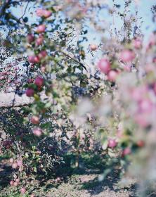 林檎の木6(部分)2017 ©Yoshihiko Ueda