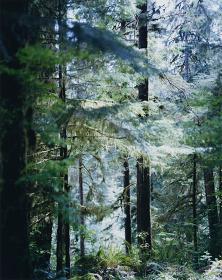 上田義彦写真展『Forest 印象と記憶 1989-2017』メインビジュアル Quinault 2017 ©Yoshihiko Ueda