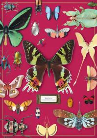 『密やかな部屋 ―きらめく昆虫標本―』メインビジュアル