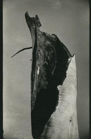 新山清『vintage photographs』イメージビジュアル