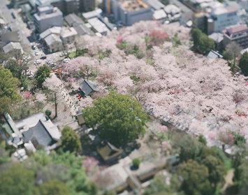 『Kyoto in Kyoto』ビジュアル