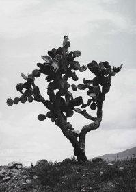 岡本太郎『ジャグル/メキシコ』1967年 ゼラチンシルバープリント、川崎市岡本太郎美術館蔵