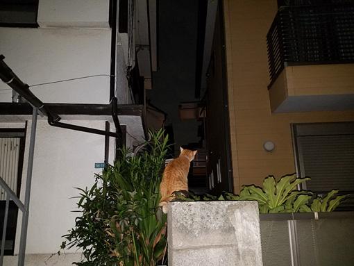 いくしゅんによる作品解説:近所の顔見知りの猫。なで肩と猫背がたまらん。