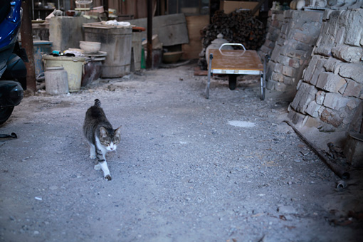 瀬戸本業窯の登り窯付近を歩く猫