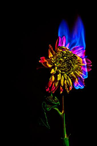 『Pressed Flower Exhibition「無彩色の痛点」』メインビジュアル