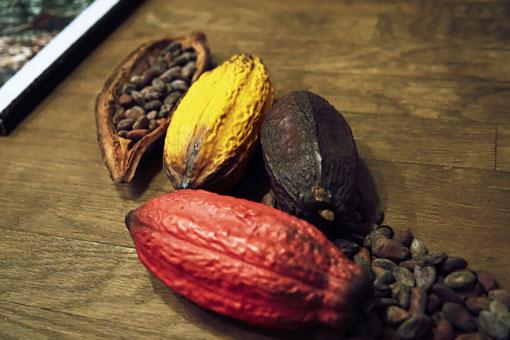 一口に「カカオ」といっても、果実のように爽やかなものから、鋭い苦味が際立つものまでその味わいはさまざま
