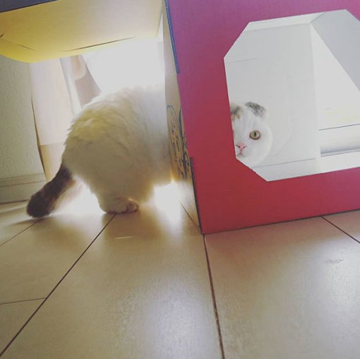 キナコの愛猫「うり」