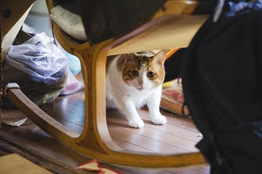 取材の様子を伺う猫のテリー