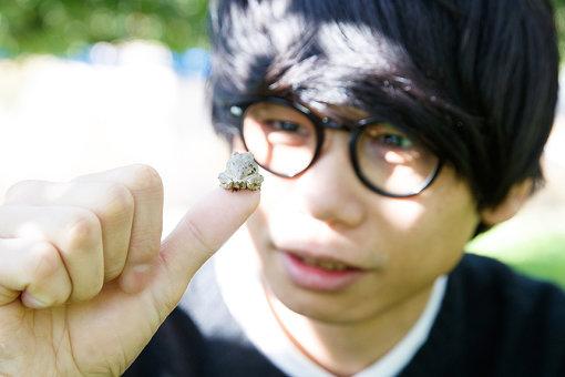 畑でカエルを見つけて「かわいい、飼いたい」と言っている、砂川一黄