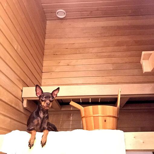 以前の自宅についていたサウナと愛犬のバーク(画像提供:田中亜土夢)