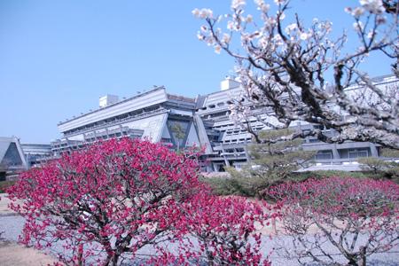 国立京都国際会館 梅と外観