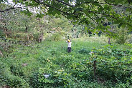 高木正勝が暮らす家の周辺風景