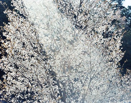 『SAKURA 10, 4-45』 2010年 ©Risaku Suzuki / Courtesy of Gallery Koyanagi