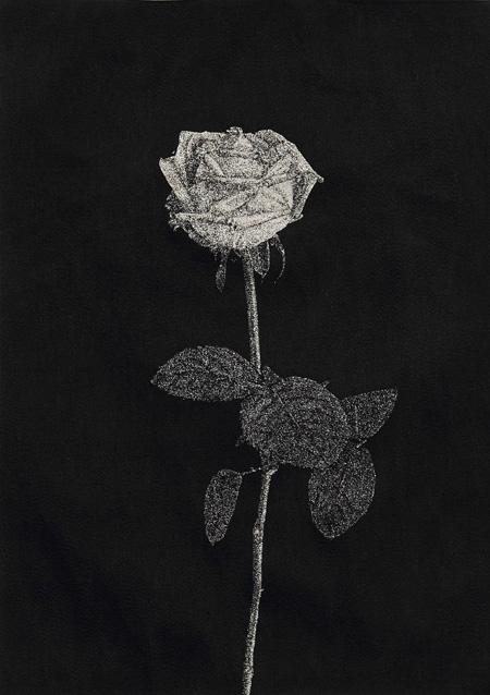 青山悟『芸術家は人生において6本の薔薇を真剣につくらねばならない』2011 ポリエステルにメタリック糸と黒糸で刺繍 42×32cm(仮) 撮影:宮島径 ©AOYAMA Satoru Courtesy Mizuma Art Gallery