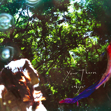 cokiyu『Your Thorn』ジャケット