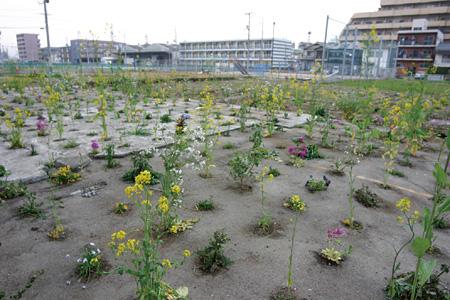 《吉島庭園プロジェクト》2007年