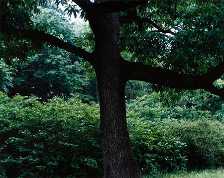 今井智己《untitled》 2004年 発色現像方式印画