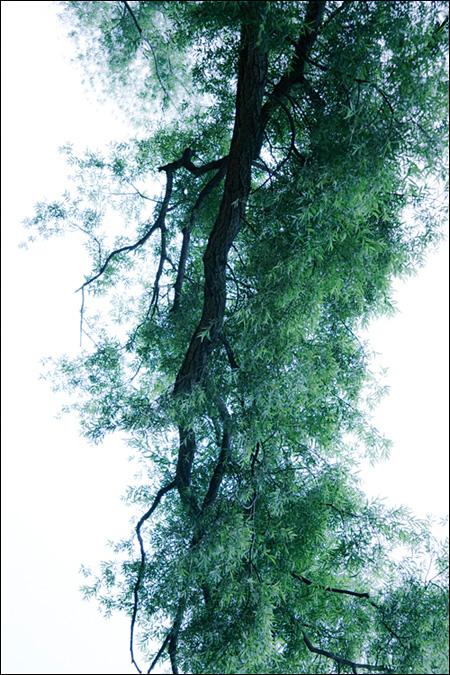高埼紗弥香作品(出展:B日程NO.48)