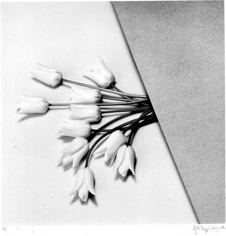 ロバート・メイプルソープ『チューリップ』 1984年