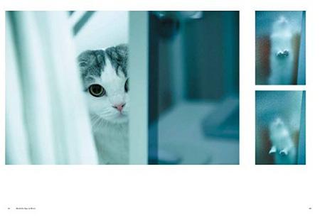 『ilove.cat 猫とクリエイターの幸せな関係』より