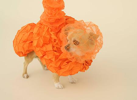 『Chihuahua Cloud』 デザイン:ライザー+ウメモト、犬種:チワワ photo by Hiroshi Yoda