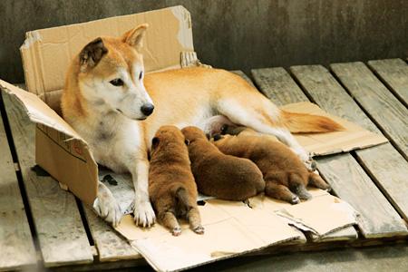『ひまわりと子犬の7日間』©2013「ひまわりと子犬の7日間」製作委員会