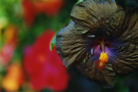 蜷川実花『noir』2010 ©mika ninagawa