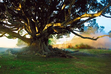 『パパの木』 ©photo : Baruch Rafic – Les Films du Poisson/Taylor Media – tous droits réservés – 2010