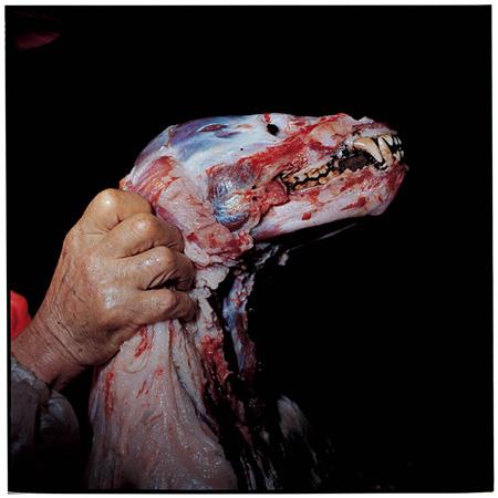 『皮を剥がれた熊』岩手県釜石市 2008年11月 ©TATSUKI MASARU