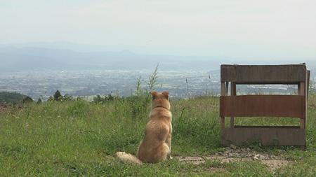 『犬と猫と人間と2 動物たちの大震災』 ©宍戸大裕